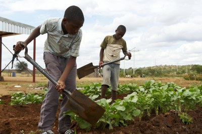 Children cultivating vegetables
