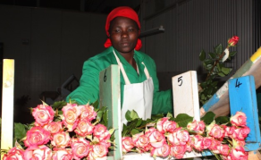 Kenyan Farmers Geared Towards Creating National Flower Brand