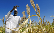 Sudan Agriculture Bank Signs Deals With U.S. Firms