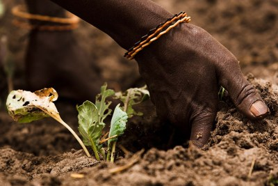 Healthy soils are critical for global food production and provide a range of environmental services.