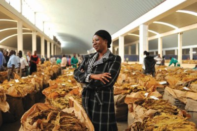 Tobacco auction floors in Zimbabwe.