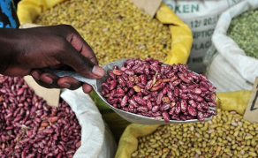 Tanzania Now Sole Beans Producer, Feeding 10 African Countries