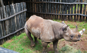 Who Killed Rhinos Found at Zimbabwean Minister Mahofa's Ranch?