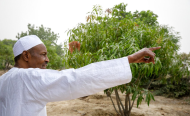 5-Point Plan to Make Buhari's Council On Food Security a Success
