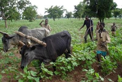 Cotton farmers in Burkina Faso.