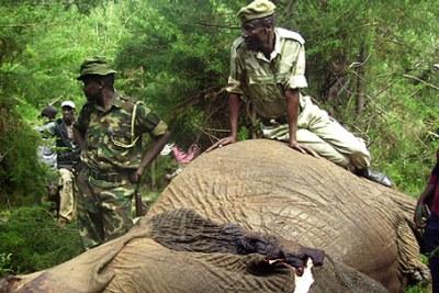 Kenya battles ivory poachers (file photo).