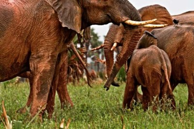 Government raises concern over elephant killings in the country.