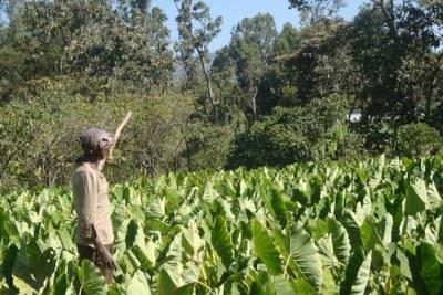 A farmer in Ethiopia.