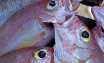 Fisheries Indicators 'Too Narrow' to Show Real Impact - Study