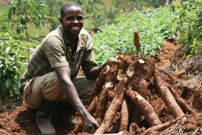 A farmer with cassava (file photo).