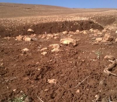 Morocco: No Tilling on This Farm #COP22