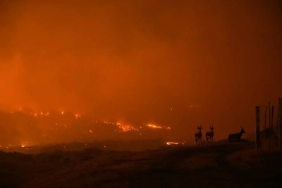 Wildfires in Somerset West threatened residents and wildlife.