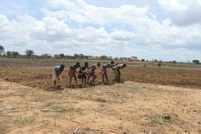 Enfants creusant pendant la saison des pluies dans l'espoir des pluies.