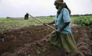 Small-Scale Farmers Plead for 10% of Govt Budget in Tanzania