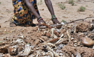 Drought Deaths 'Fake News', Says Kenya DP Ruto