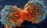Journée mondiale de lutte contre le Cancer 2019