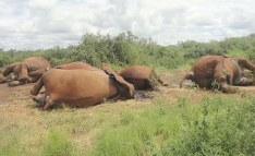China Is Proving Key to Reducing Africa's Wildlife Trafficking