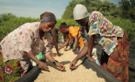Armed With Coffee, Uganda's Women, Youth Look to Secure Land