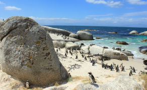 Penguins Are Key Indicators of Ocean Health, Study Shows