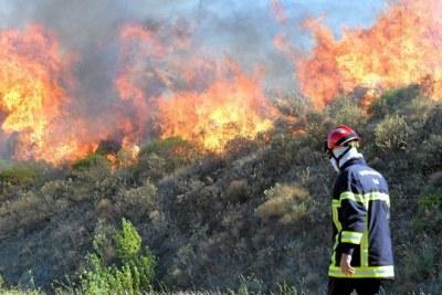 L'incendie de l'Ourika n'est qu'un arbre qui cache la forêt