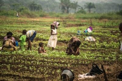 En République démocratique du Congo, la FAO entend rétablir les moyens de subsistance et améliorer la production alimentaire d'1, 8 million de personnes touchées par la crise.