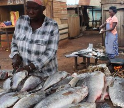 Will Cage Farming Protect Lake Victoria's Fish?