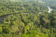 Plaidoyer pour la fin du moratoire sur les forêts en...