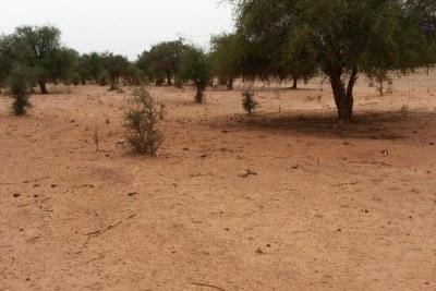 Région de Tillabéry au Niger (illustration) où s'est déroulée une meurtrière attaque contre l'armée nigérienne, mercredi 15 mai.