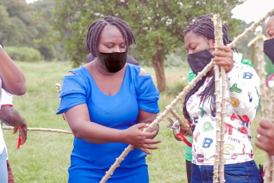A practical session on cassava production