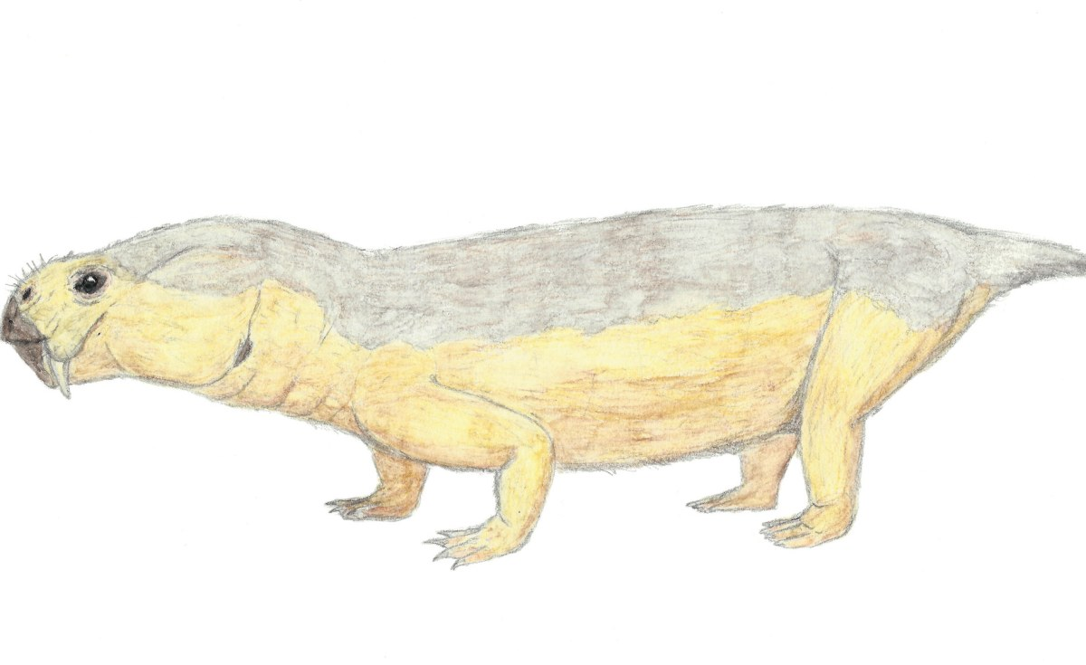 South Africa: What an Unusual Fossil Reveals About Parental Care Among Pre-Mammalian Ancestors