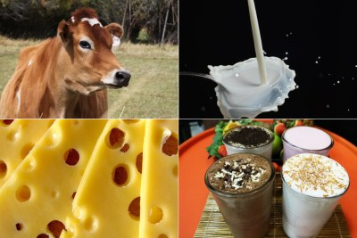 Jersey cow, dairy products