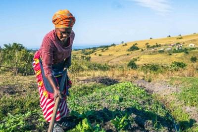 Farmer Neliswa Mdukisa tends her garden in Xolobeni.
